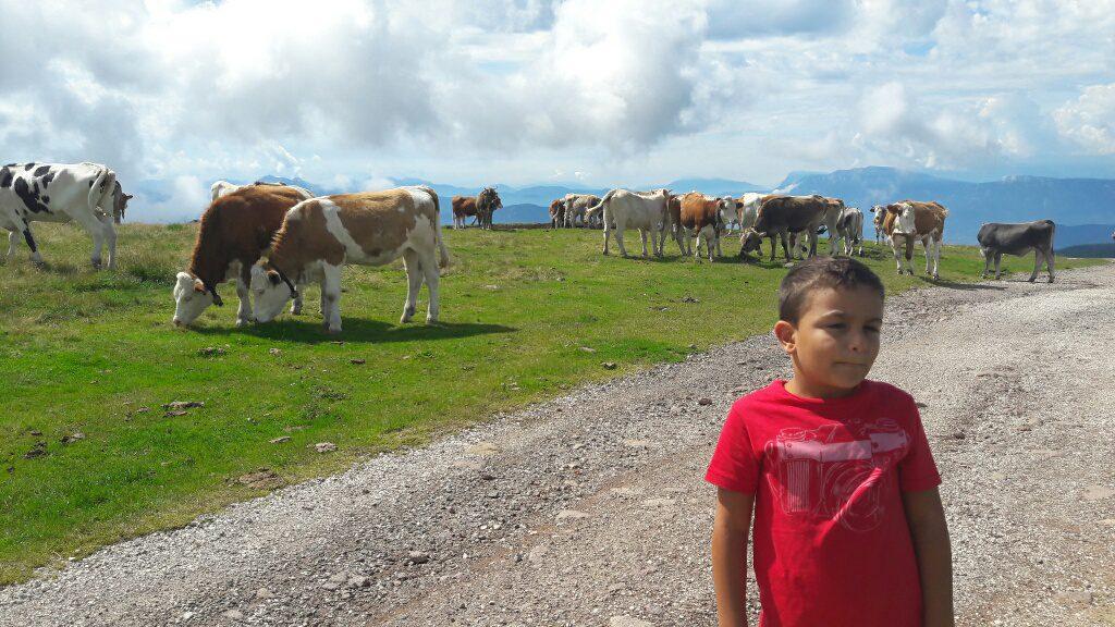 Franci tra le mucche al Corno del Renon