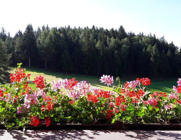 Valle del Renon fiorita montagna d'estate
