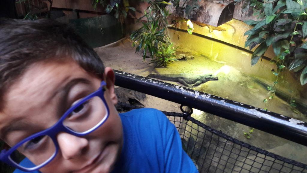 Roma Bioparco coccodrillo