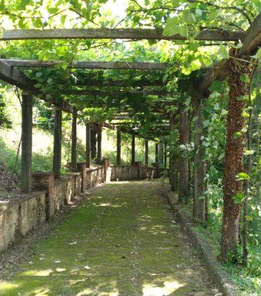 Degustazione di vini Uccelliera e birre a Torre a Cenaia