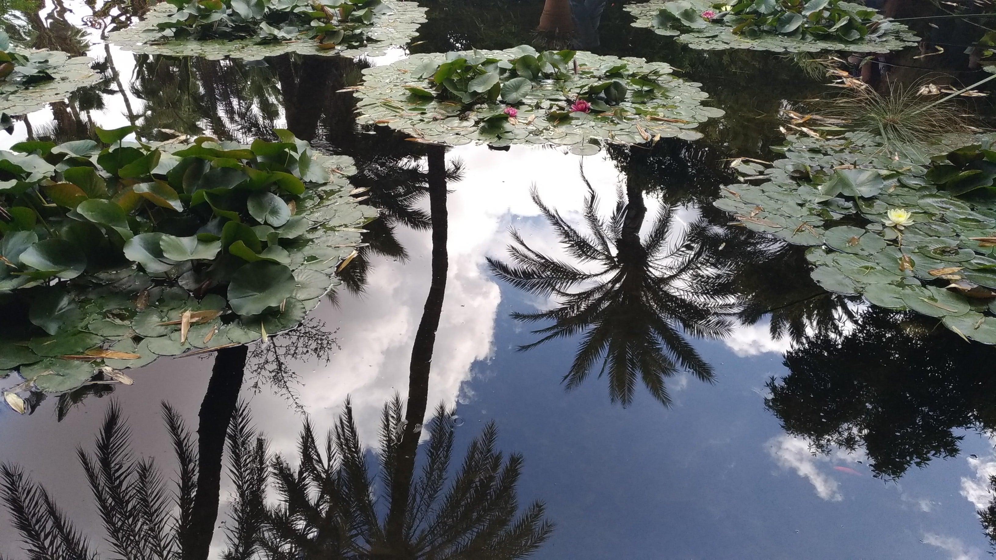 Marrakesh Marocco giardini Majorelle tra palme e ninfee
