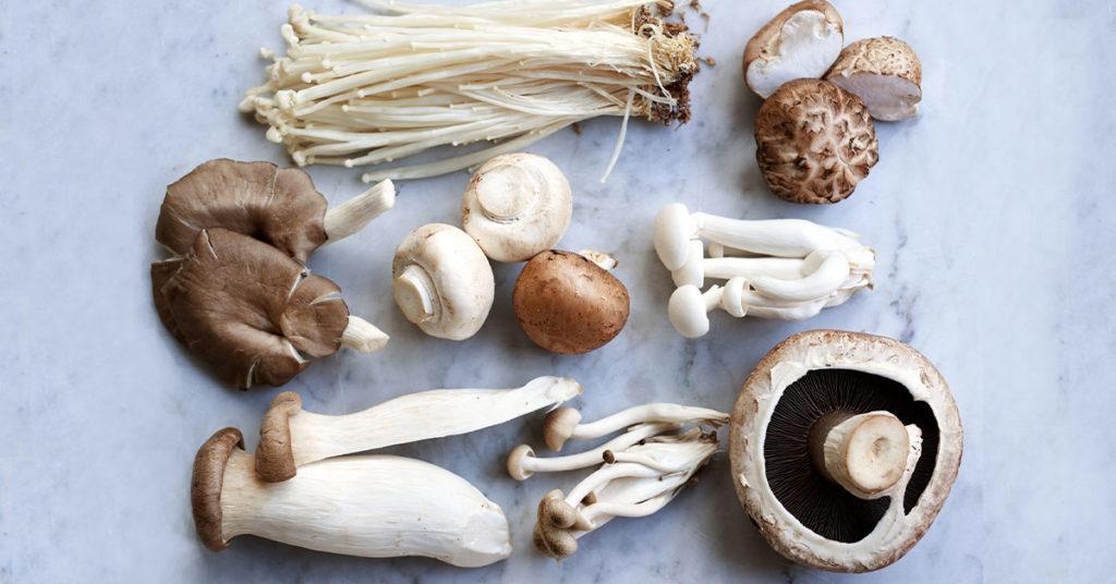 Autunno funghi